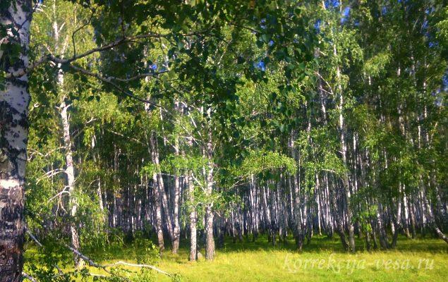 Лес Новосибирского края